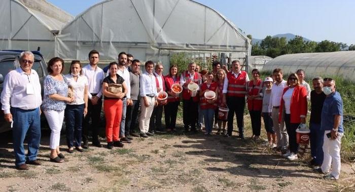 Salıcı ve Böke öğrencilere burs olarak dönen CHP Başiskele'nin sera hasadına katıldı